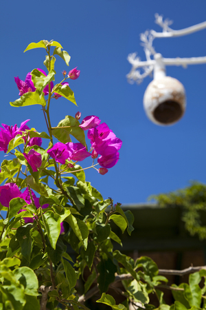 Decorated tree on a begonia plant at famous tourism city Bodrum