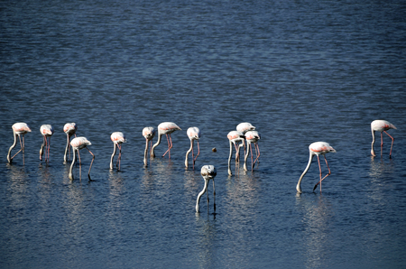 Flamingos view from famous tourism city Bodrum Turkey