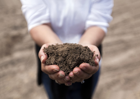 agricultural area: Brown rich soil on hands from agricultural area