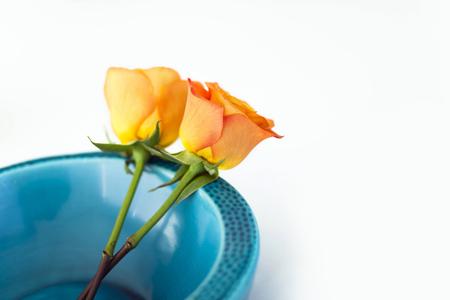 rosas naranjas: Two fresh orange roses in a blue vase