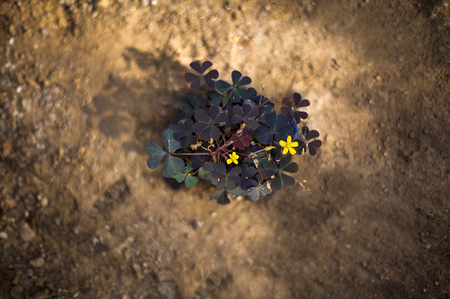struggle: Weed flower struggle to survival on hardpan earth