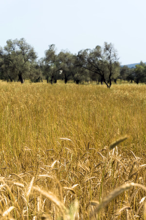 agricultural area: Glean field in agricultural area at mediterranean country Stock Photo