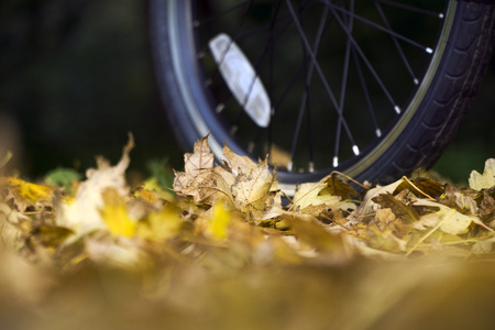 Orange folding bike at the forest on autumn day.