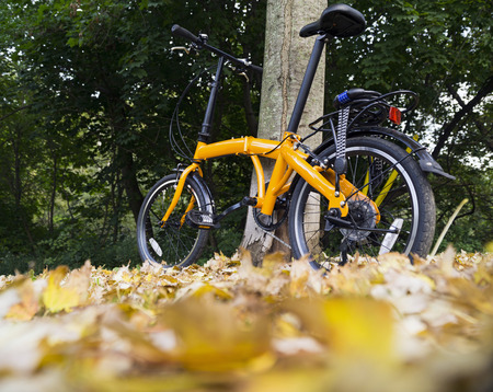 Orange folding bike beside the tree in a forest on autumn day.