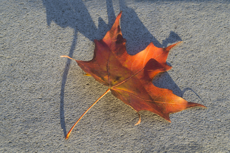 Canada flag's icon maple tree leaf is on floor Stock Photo - 80023783