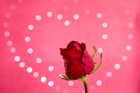 red rose bokeh: red rose on heart bokeh background
