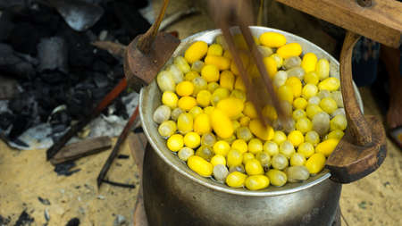 boil: process boil cocoon
