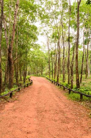 abound: explore the forest treks