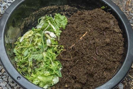 method to feeding earthworms in enameled bowl Stock Photo