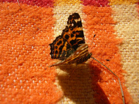 Butterfly sitting on a carpet