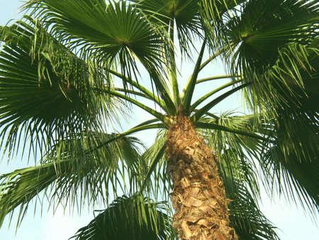 Palm Tree 2 Lizenzfreie Bilder