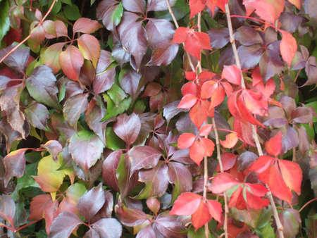 Herbst Bl�tter Hintergrund Lizenzfreie Bilder