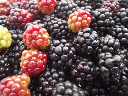 BlackBerry Hintergrund Lizenzfreie Bilder