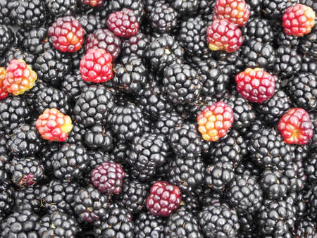 Blackberry Hintergrund