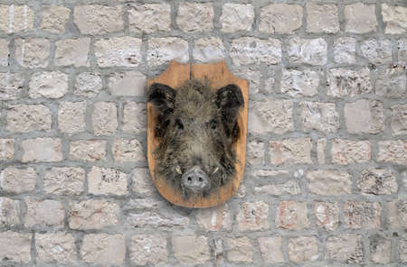 wild boar head on stone wall photo