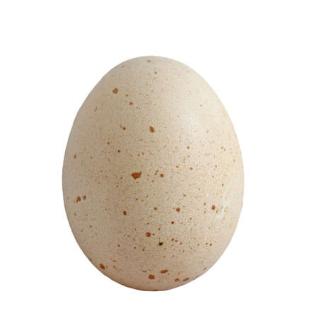 fresh egg isolated on white