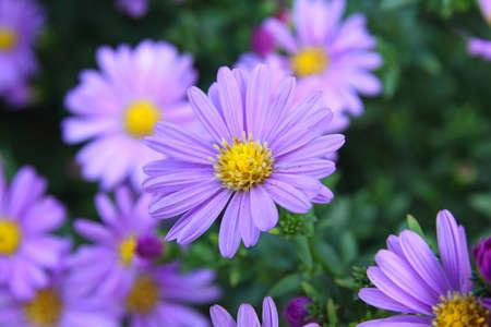 purple plants: purple flowers