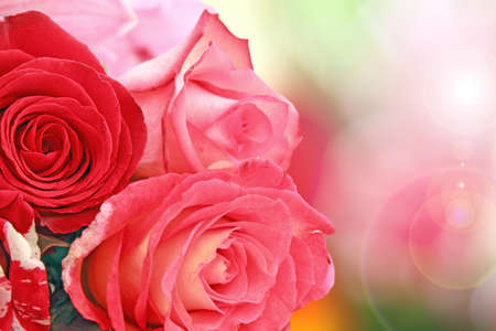 beautiful roses closeup on abstract colorful background photo