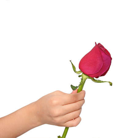 child offering a rose  Stock Photo
