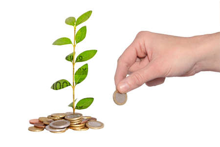 financial item: hand adding coin to money plant