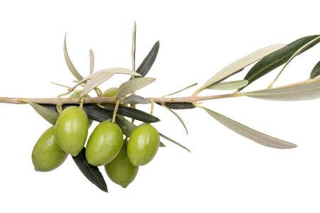 mediterrane k�che: f�nf gr�nen Oliven am Zweig