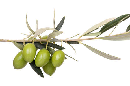 mediterranean cuisine: five green olives on branch