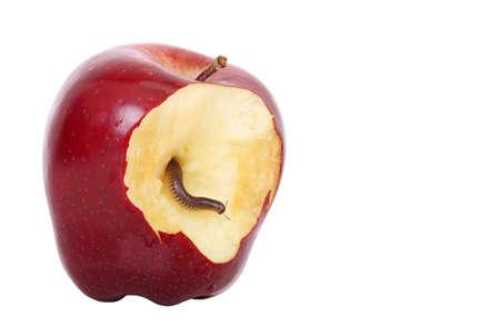 gusano: gusano está saliendo de la manzana mordida Foto de archivo