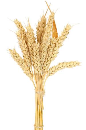wheat bundle isolated on white photo