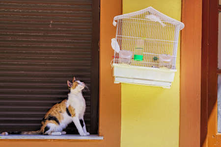 cat is staring at a bird in cage photo