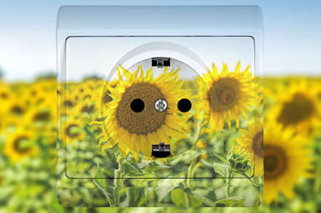sunflower socket, concept for alternative sources of energy photo