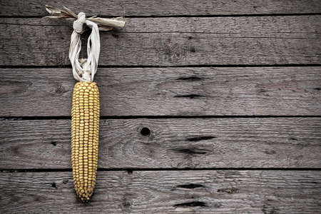 corn cob: dry corn hanging on old wooden wall