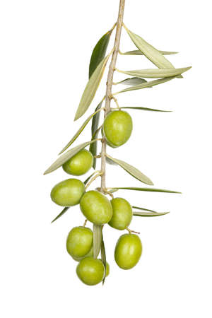 olive branch with green olives isolated on white