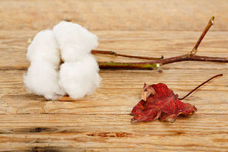 cotton ball: cotton ball and leaf on wooden surface