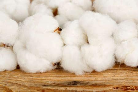 cotton crop: macro of cotton balls on wood