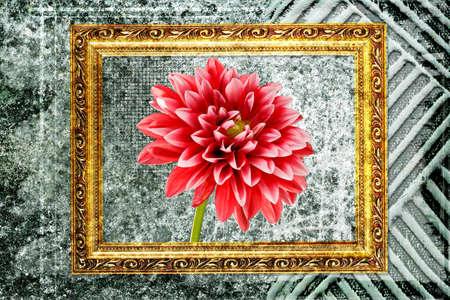 dahlia flower: red dahlia flower inside golden frame against abstract wall Stock Photo