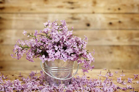 lilac flower in tin bucket against wooden planks photo