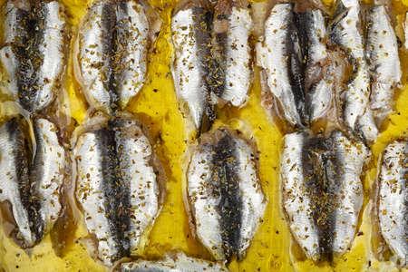 sardinas: sardinas crudas filete con orégano en aceite de oliva Foto de archivo