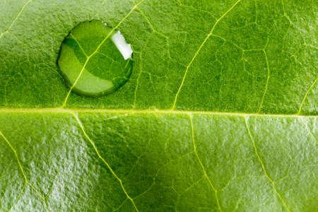 Macro van één water druppel op groen blad Stockfoto - 57130736