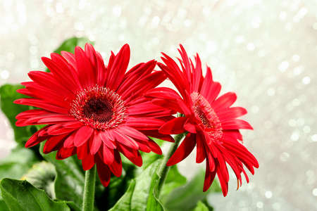 red gerbera flowers against abstract background