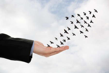 bandada de pájaros que forman una flecha volando de una mano masculina, el concepto de éxito Foto de archivo