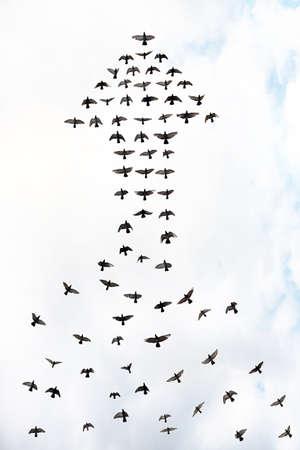 矢印、抽象の成功の概念を形成する鳥の群れ