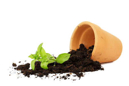 mishap: flower pot with spilled out soil isolated, damage concept