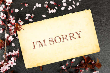 apologise: I am sorry on paper with almond tree twig