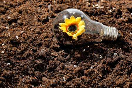 flower growing inside a light bulb on soil, concept for multiple uses Stok Fotoğraf