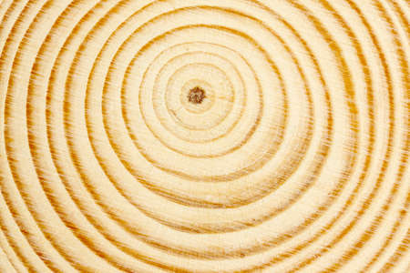 macro of cross section of tree branch with rings