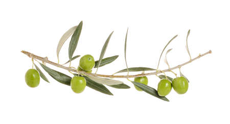 olive tree branch with olives isolated on white Zdjęcie Seryjne