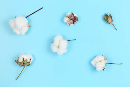 flat lay image of cotton balls on blue