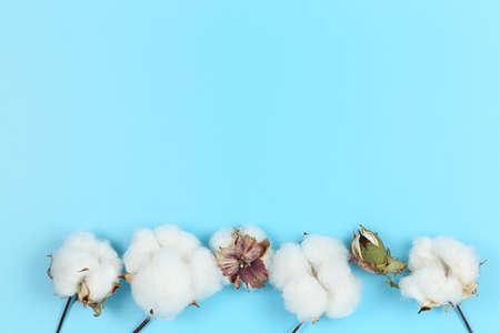 flat lay image of cotton balls on blue, copy space Zdjęcie Seryjne