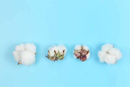 flat lay image of four cotton balls on blue with copy space