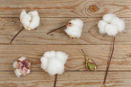 flat lay image of cotton balls on wood Zdjęcie Seryjne